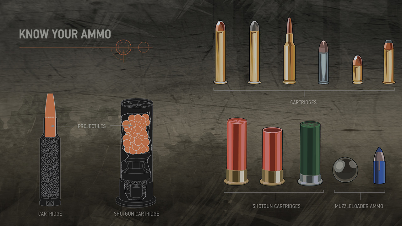 Illustration of different types of ammunition, including cartridges, shotgun cartridges and muzzleloader ammunition.